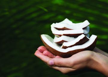 Composition Coconut Handbook